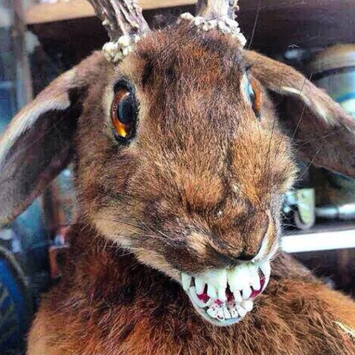 craptaxidermy